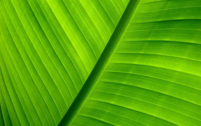 wallcoo.com_1920x1200_Widescreen_Wallpaper_nature_00240_green_1920x1200