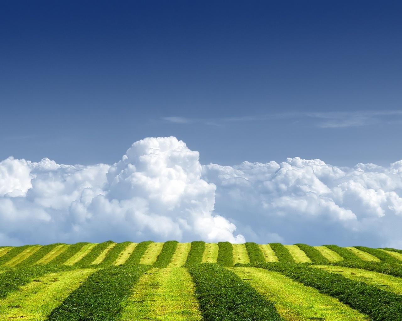 ws_Grass_Green_Field_Over_Clouds_1280x1024