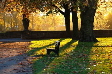 194507_park_lawka_alejki_liscie_przebijajace_swiatlo_jesien